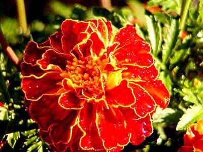 Piante e fiori da giardino a cernobbio paginegialle.it