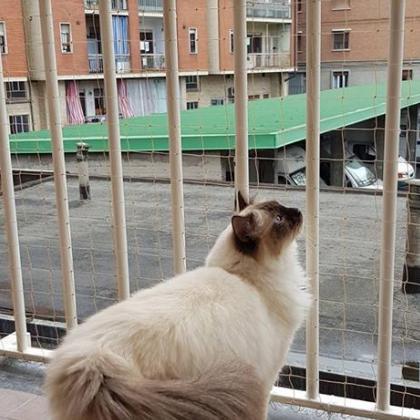 Antiparasit Reti Per Gatti Torino Via Cherubini Luigi Salvatore 72a