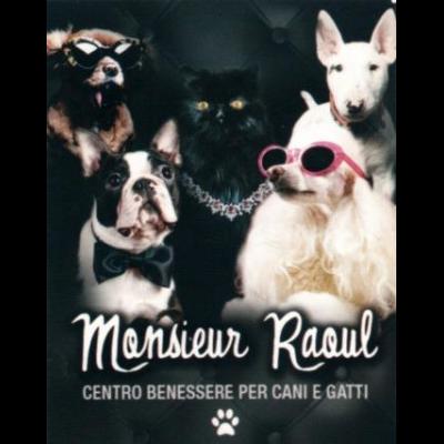 Monsieur Raoul - Animali domestici - toeletta San Nicola La Strada