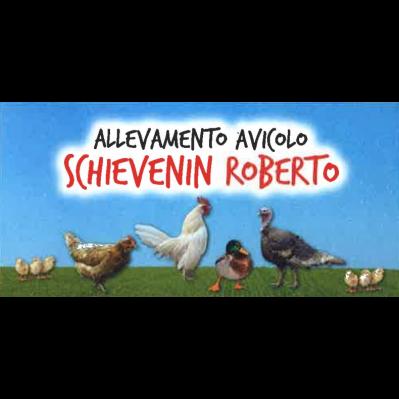 Allevamento Schievenin Roberto - Avicoltura - impianti ed attrezzature Feltre