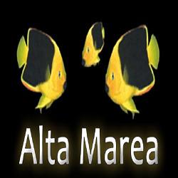 Alta Marea - Tutto per L'Acquariologia - Acquari ornamentali ed accessori Cava De' Tirreni