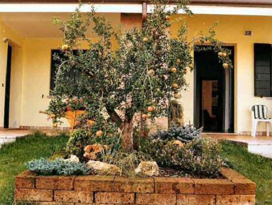 Arbusti Decorativi Da Giardino : Piante ornamentali sempreverdi da giardino piante da giardino