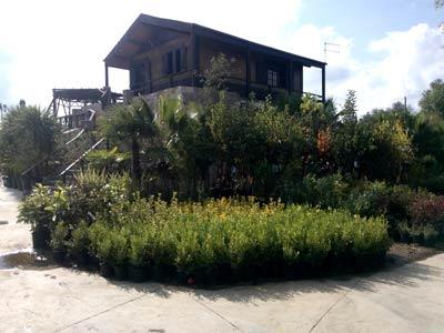 Ricchiuti vivai piante francavilla fontana via ostuni for Arredamenti francavilla fontana