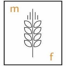 Molino Fochesato - Molini Monte Di Malo