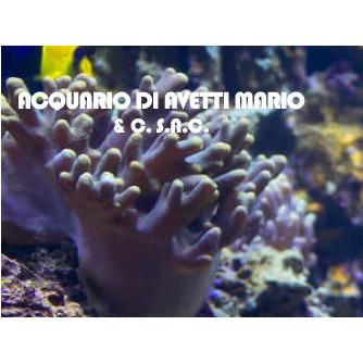 Acquario - Acquari ornamentali ed accessori Terni